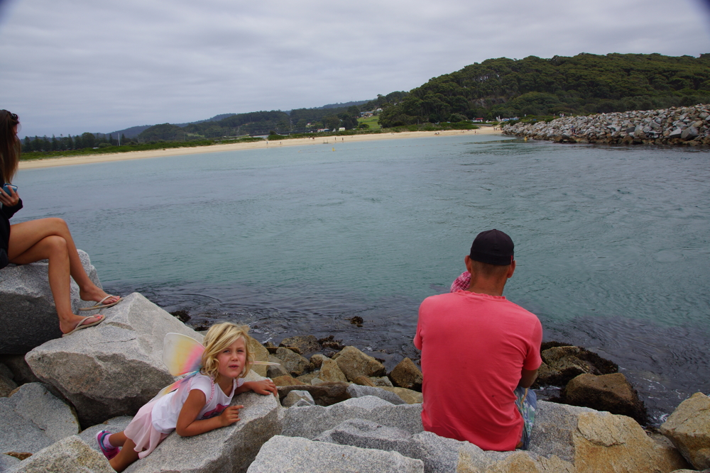 Looking for seals at Narooma